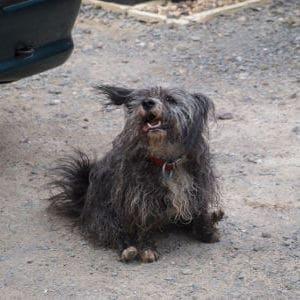 Ruth, 14 Jahre althunde
