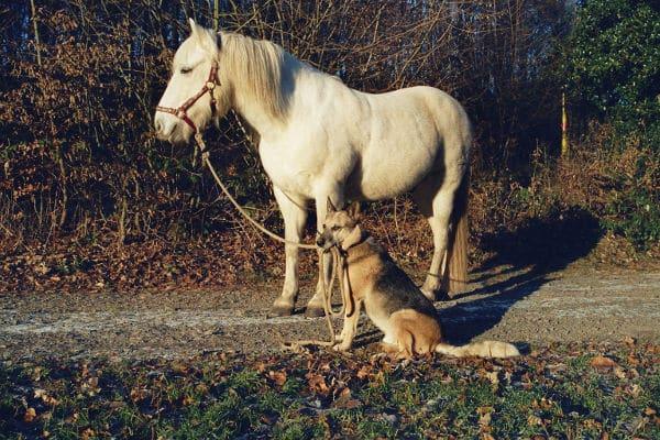 Pferd und Hund im Winter