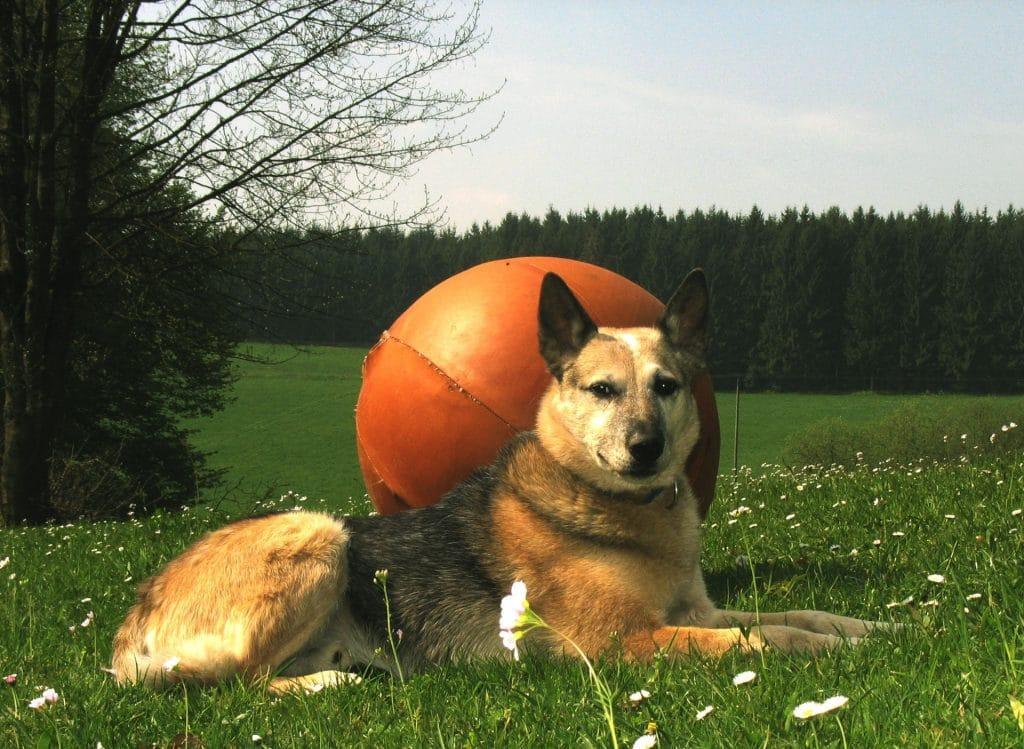 Hunde-Logisch: Hundeschule im Oberbergischen Land