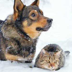 Hunde und Katzen gemeinsam halten
