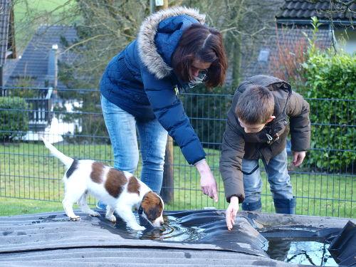 Kind und Hund müssen von den Erwachsenen angeleitet werden.