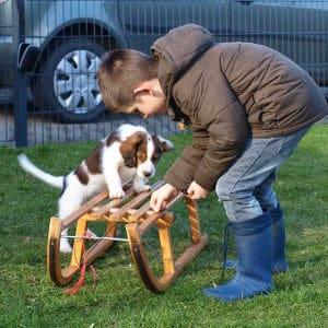 Familienberatung: Kinder und Hunde