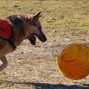 Treibball Hundesport