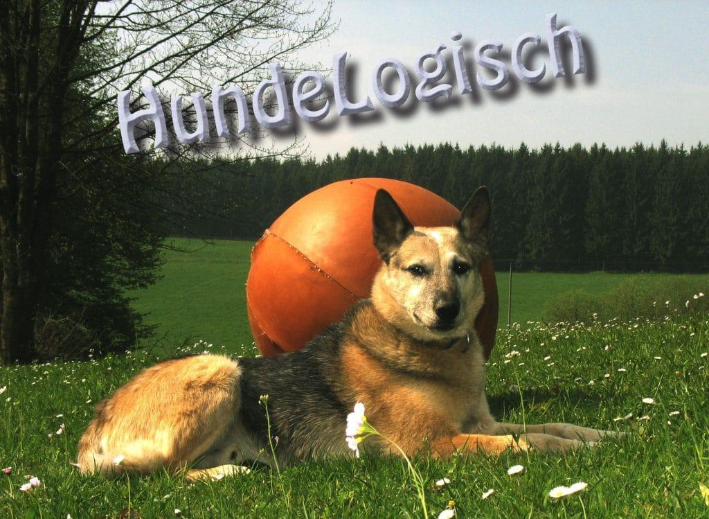 Hunde-Logisch: Ihre Hundeschule im Oberbergischen Land