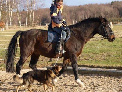Mit Pferd und Hund unterwegs