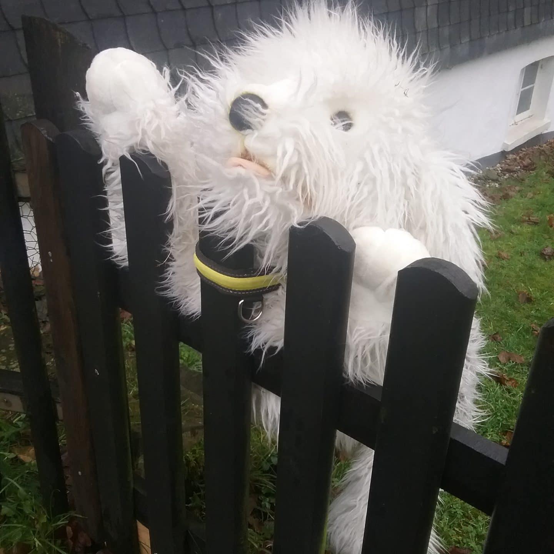 Gefahr durch Zäune, Tore und andere Tierfallen