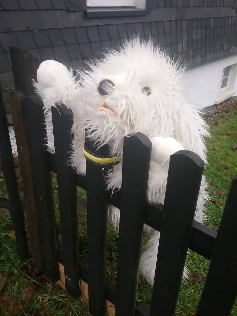 Gefahr am Zaun