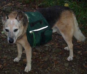 Hund mit Rucksack