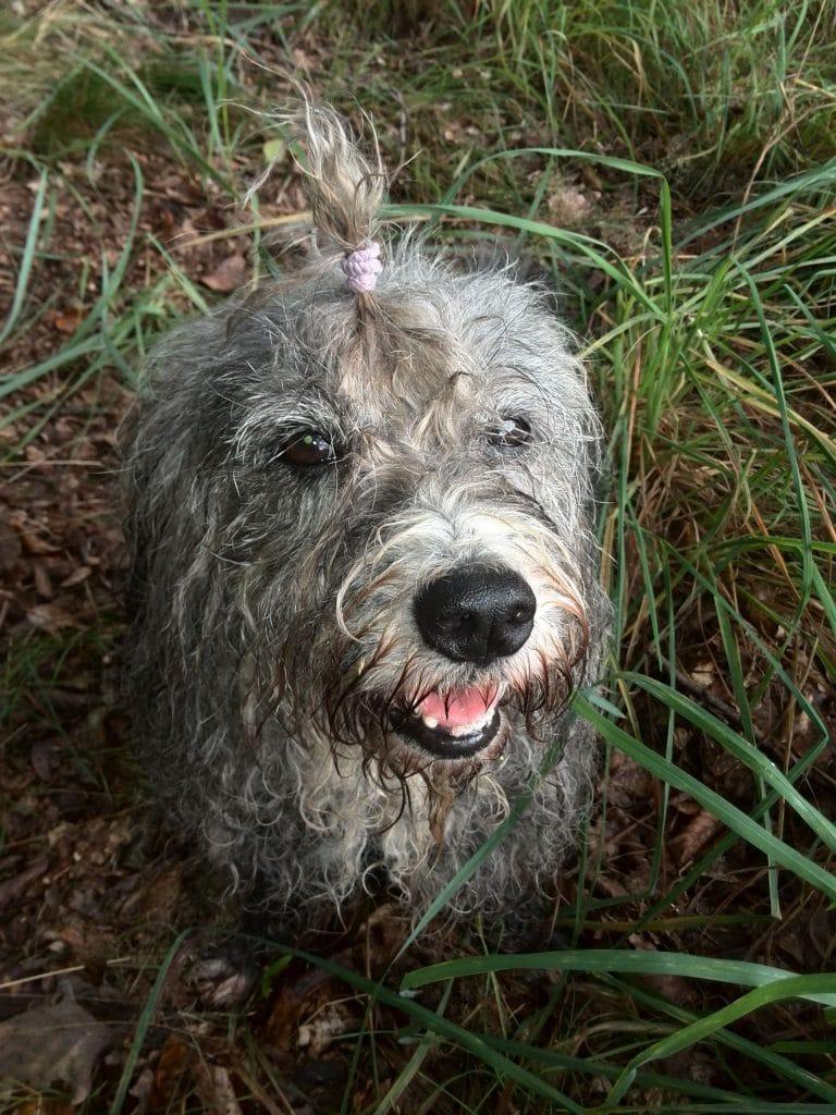 Hund Ruth