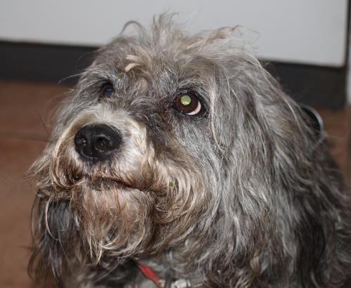 Hundemahlzeit Lecker und gesund