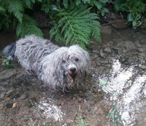 Hund im Wasser
