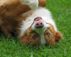 Hund ist, was er isst! Hund Boromir