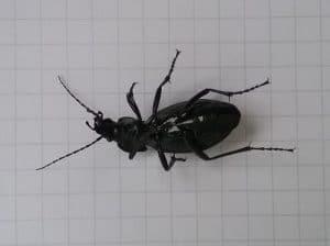 Havarierter Käfer