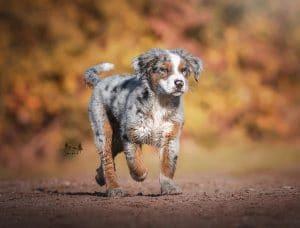 Die richtige Hundewahl