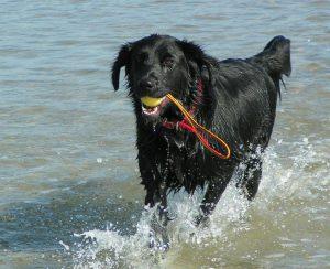 Hund mit Ball
