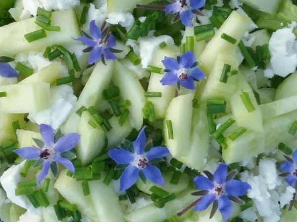 Borretsch im Salat