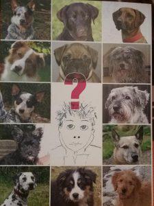 Ratgeber Hundekauf