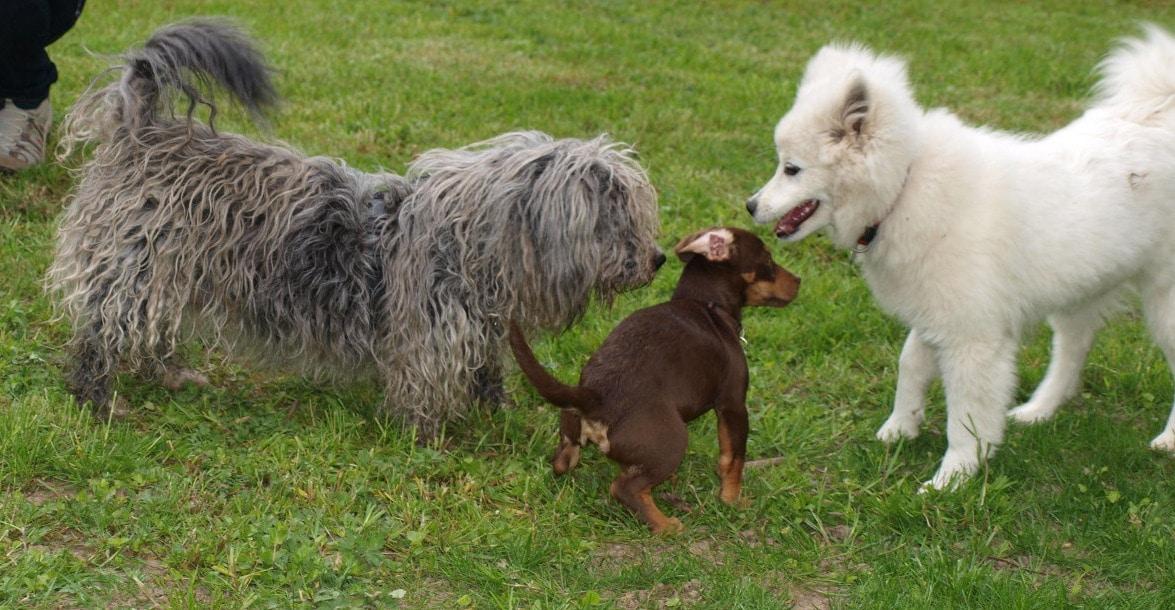 Hundetreffen
