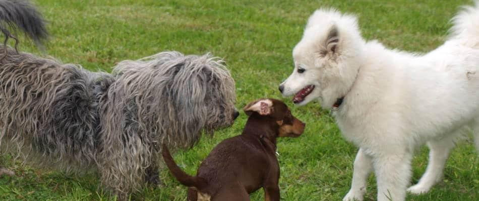 Hund sucht Hund – Kontaktbörse