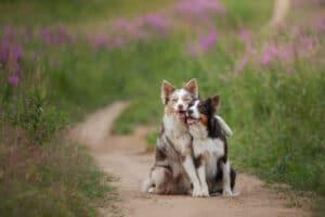 Freundschaft Adobe Stock Foto 598560
